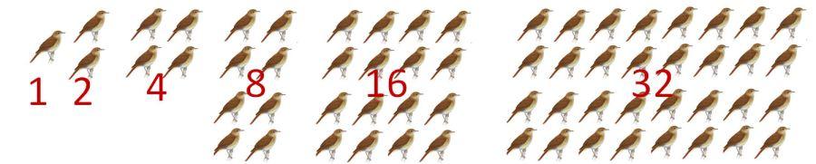 birdsilograndma.jpg